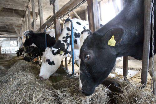 白血病原因: 原因不明…千葉の牛乳問題でささやかれる「牛白血病」との
