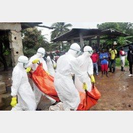 リベリアでエボラ犠牲者を搬送する保健職員/(C)AP