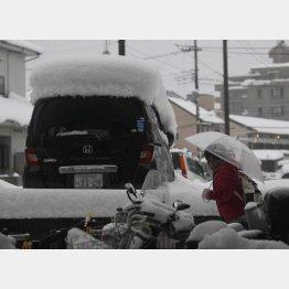2月15日東京に記録的大雪/(C)日刊ゲンダイ