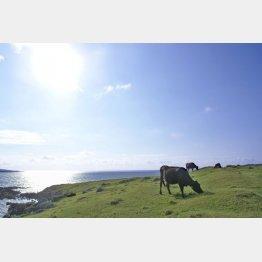 畜産農家の牛の世話体験も