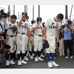 敗戦に頭を下げる「最後のPL野球部員」(C)日刊ゲンダイ