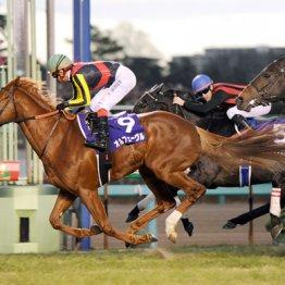 最新の3冠馬(11年有馬記念)