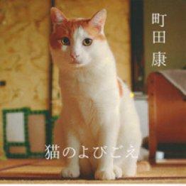 ネコの文庫本特集