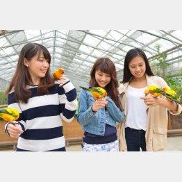 静岡県の「掛川花鳥園」
